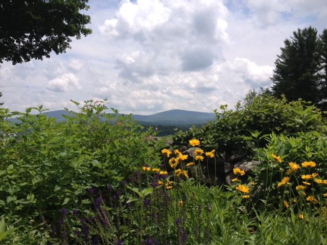 June afternoon in Katrina Kenison's garden